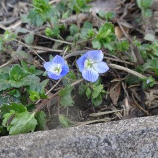 小さな春を発見